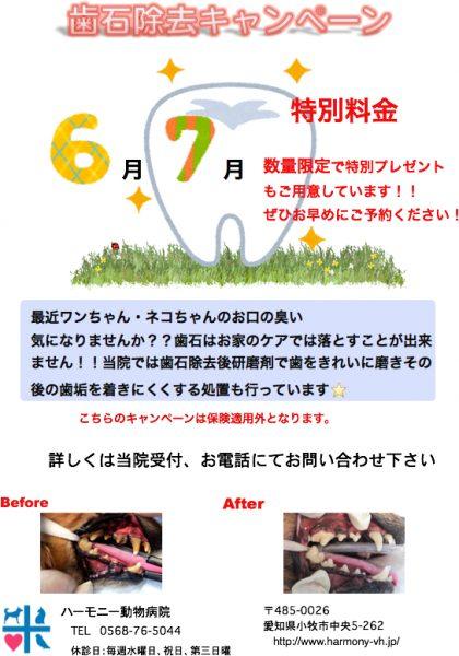 ★歯石除去キャンペーン★