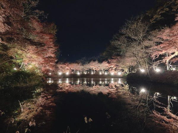 🍁夜の紅葉🍁